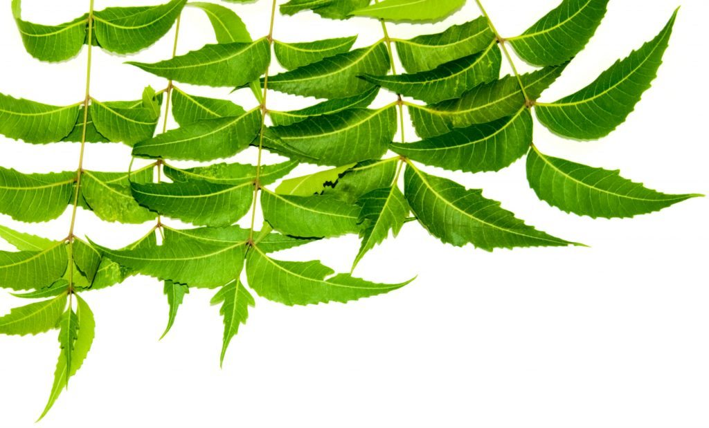 Neem leaves for pimple on scrotum