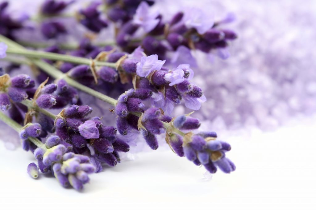 Lavender essential oil for rosacea