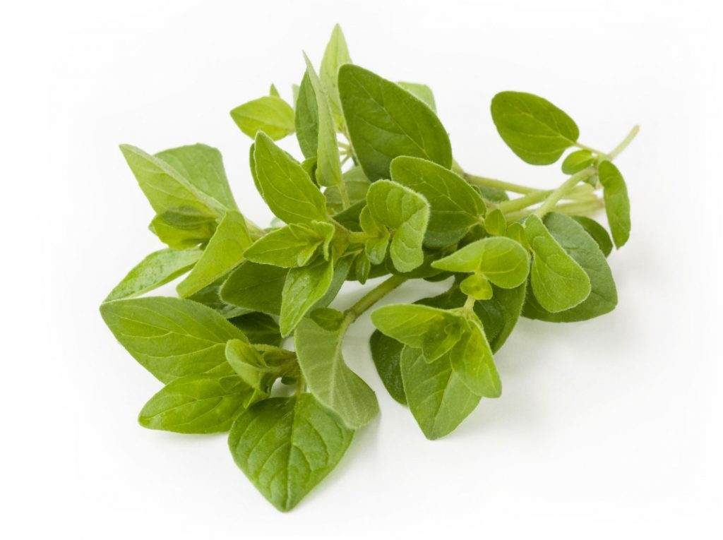 Oregano essential oil for rosacea